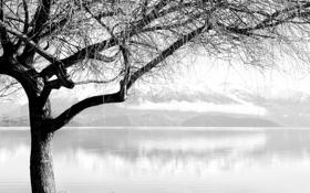 Обои вода, деревья, ветки, фото, дерево, пейзажи, красивые обои для рабочего стола