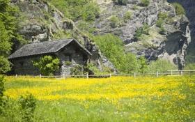 Картинка зелень, поле, лето, трава, цветы, скала, дом