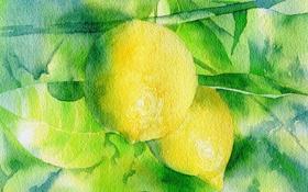 Обои акварель, лимон, фон, картина