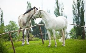 Обои природа, забор, кони