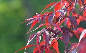 Обои ветка, листья, осень, капли, роса, вода