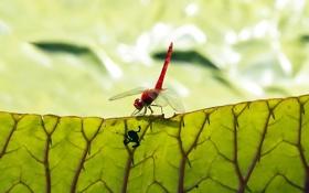 Обои лист, стрекоза, лягушонок