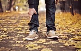 Обои листья, ноги, дорога, шнурки, кеды, осень, улица
