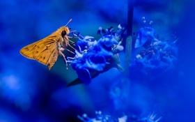 Обои цветок, бабочка, растение, насекомое