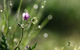Обои цветок, капли, блики, фон, игра, размытость, света