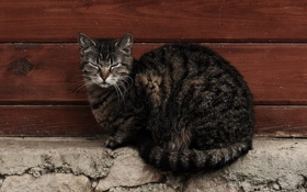 Картинка кот, стена, кошак, котяра