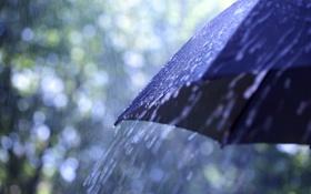 Обои макро, зонтик, дождь, капли. погода