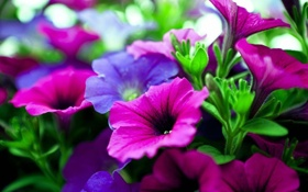 Картинка листья, природа, ковер, цвет, лепестки, сад, клумба