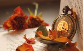 Обои цветок, макро, время, часы, лепестки, книжка