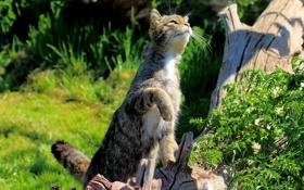 Обои кошка, лето, трава, кот, кошак, лапка