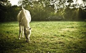 Обои поле, конь, лето