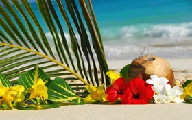 Обои море, пляж, цветы, коктейль, листок пальмы