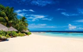 Картинка песок, пляж, пальмы, океан, экзотика