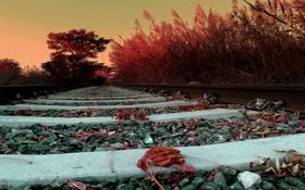 Обои дорога, листья, рельсы