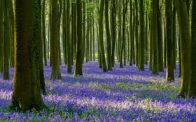 Обои лес, трава, деревья, цветы