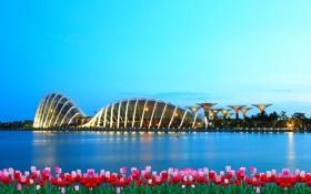 Обои цветы, город, здания, вечер, залив, Сингапур, тюльпаны