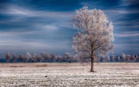 Обои иней, небо, деревья, дерево