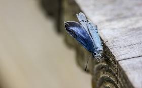 Обои бабочка, доска, макро