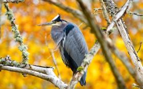 Картинка осень, ветки, птица, клюв