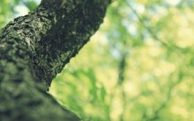 Обои лето, свет, деревья, дерево, настроение, фокус, размытие