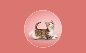 Обои котёнок, круг, йога, розовый фон