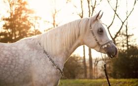Картинка солнце, свет, серый, конь, лошадь, грива, профиль