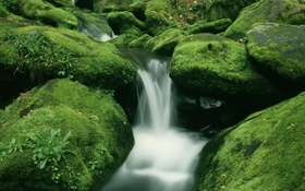 Картинка лес, вода, ручей, камни, водопад, мох, поток