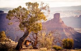 Картинка природа, пейзаж, горы, утро, дерево