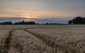 Картинка поле, пейзаж, ночь, колосья