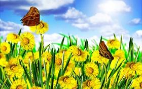 Картинка весна, небо, бабочка, цветение, одуванчики, поле, blossom