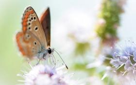 Картинка цветы, фон, бабочка