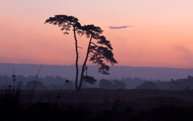 Картинка пейзаж, природа, дерево, обои, вечер, wallpapers