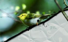 Обои птица, remix, gres