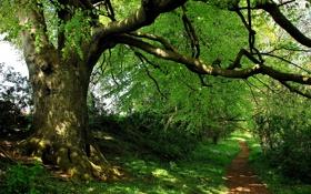 Картинка лес, деревья, парк, дорожка, тропинка, кусты