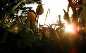 Обои зелень, трава, листья, солнце, лучи, свет, цветы
