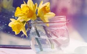 Картинка вода, цветы, желтые, банка, нарциссы
