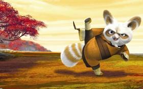 Картинка Kung Fu Panda, мастер шифу, мультфильм, кунг-фу панда