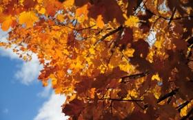 Обои небо, ветки, Осень, листики
