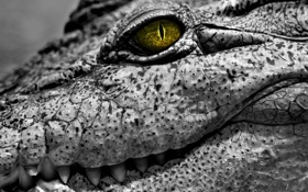 Обои глаз, кожа, крокодил, рептилия