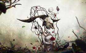 desktopography, сюрреализм, ворон, роза, цветок, череп, бабочка, листья обои