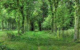 Обои дорога, лес, лето