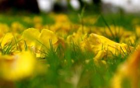 Картинка листья, Макро, осень, трава
