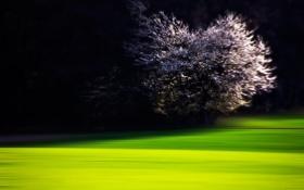 Картинка ночь, дерево, лужайка