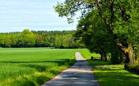Обои облака, дорожка, буйство зелени, солнечный, небо, лето, возле поля