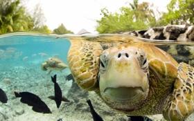 Обои глаза, макро обои, морская черепашка под водой
