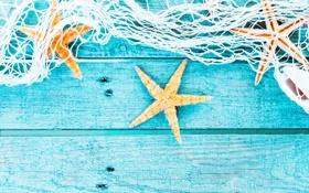 Обои сетка, ракушки, морские звезды