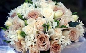 Обои букет, розы, композиция, фрезии, цветы