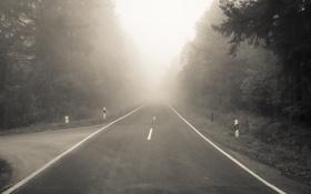 Обои дорога, лес, туман, разметка, поворот