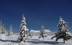 Картинка winter, ski, snowshoes