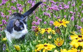 Обои поле, кошка, лето